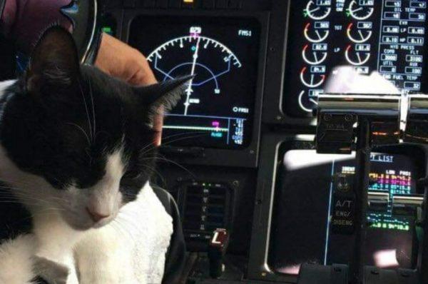 في حادثة غريبة ..طائرة تجارية تُجبر على الهبوط في العاصمة السودانية بسبب قطة متطفلة
